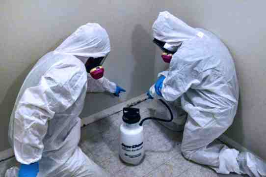 mold damage, mold remediation, mold removal
