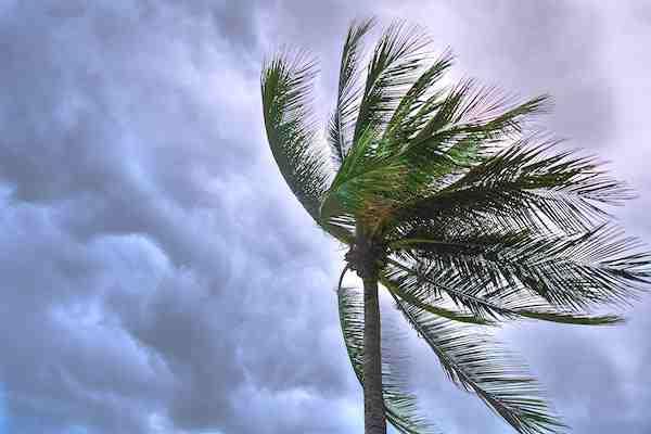 storm damage, storm damage restoration, tree damage