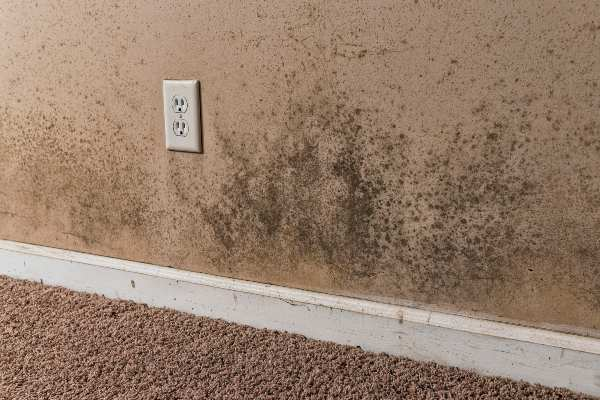 local mold removal services